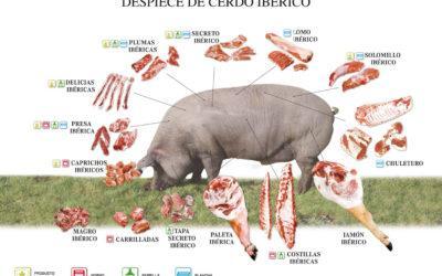 Les 3 peces de porc ibèric que has de conèixer